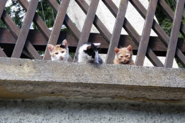 unsere süßen Katzen