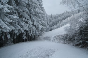 Die Waldheimat im Winterkleid