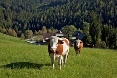 Urlaub am Bauernhof hautnah erleben