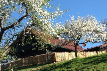 Obstgartenhaus