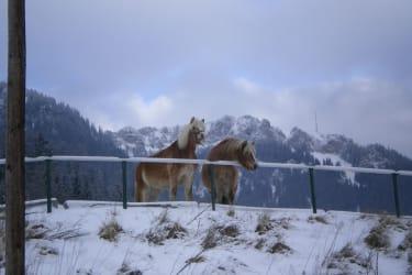 Saartje und Sientje im Winter