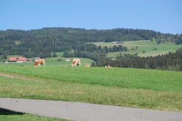 Unsere Kühe dürfen immer auf die Weide