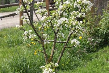 herrliche Obstbäume