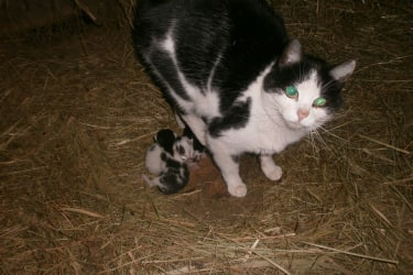 Katze mit Babys