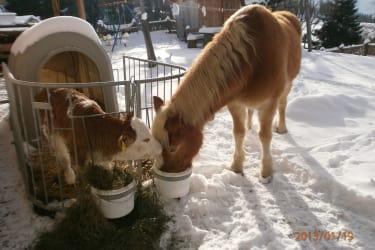 Pferd und Kalb Winter