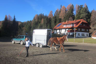 Wer Lust hat kann bei uns auch mit seinem Pferd Spaß vom Boden aus haben