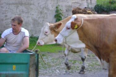 unsre Kühe