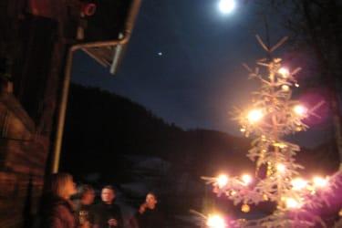 Weihnachtsbaum in der Natur