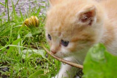 Kätzchen am Bauernhof