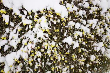 Wintergruß