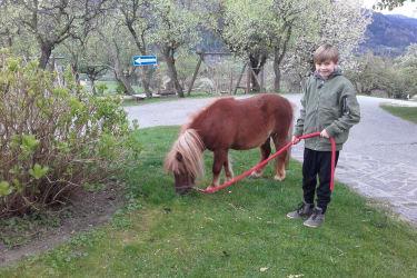 Bobby beim Rasenmähen