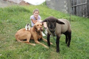 Unsere Tiere freuen sich über die Streicheleinheiten