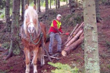 Bei der Waldarbeit
