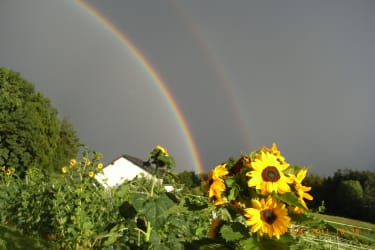 Auf Regen folgt Sonnenschein