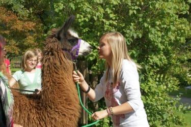 Lama-Begrüßung