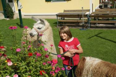 So ein Spaziergang mit Lama ist fein!