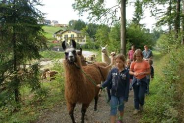 Das Wandern ist des Lama Lust ...