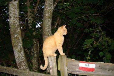Katze Schnurli