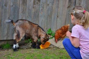 Tiere beobachten, füttern, streicheln