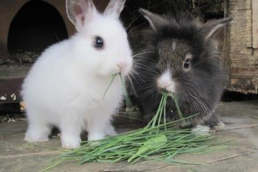 Bencer und Rocky