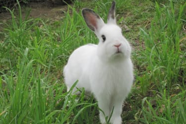 Hase Rocky