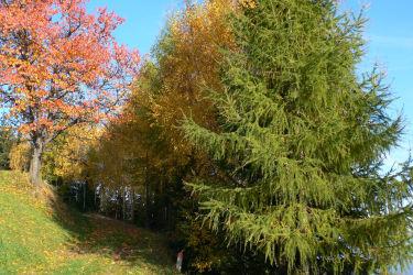 Herbstgenuß