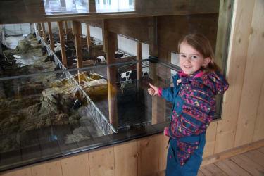 die Tiere im Stall durch ein Sichtfenster beobachten
