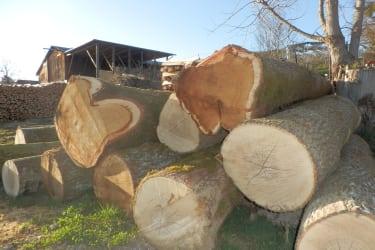 Wertholz aus unserem Wald