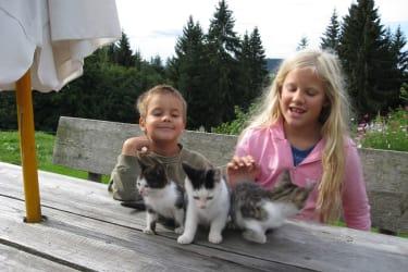 Das Streicheln freut die Katzen- und die Menschenkinder