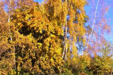 Ein wunderschöner Herbsttag