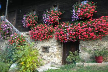 Blumenpracht am Ferienhaus