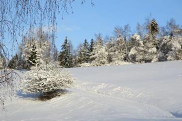 Ein Winterspaziergang durch frisch verschneite Wiesen und den Wald