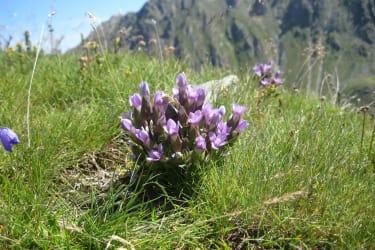 Faszinierende Natur in den Bergen