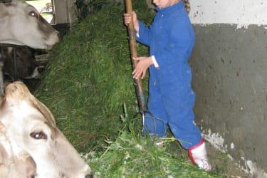 Gras für unsere Kühe