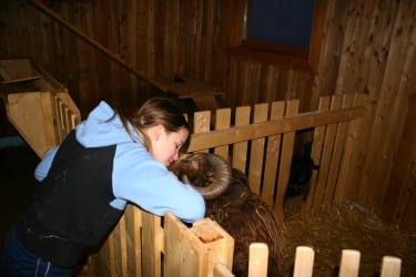 Unsere Tiere am Bauernhof lieben Streicheleinheiten