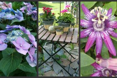 Wir lieben Natur und Blumen