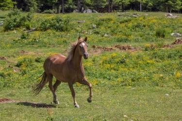 unsere Pferde fühlen sich sichtlich wohl auf der Alm