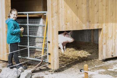 Guten Morgen, mein rosa Schweinchen