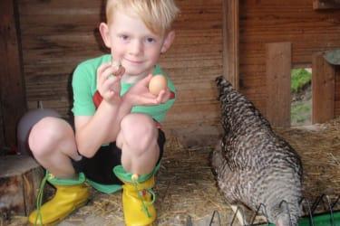 Im Hühnerstall