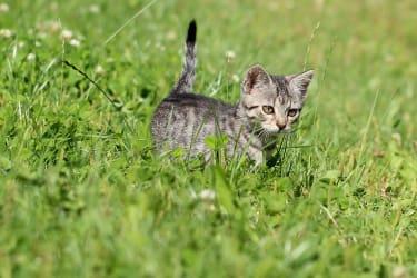 Tiere am Bauernhof – Katzen