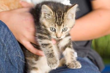 Baby-Kätzchen