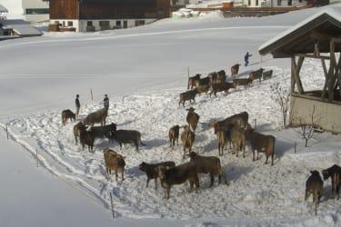 Auslauf im Schnee
