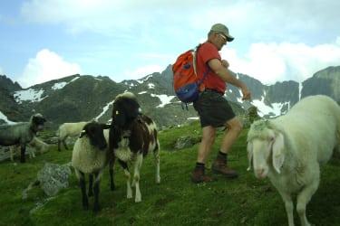 Besuch bei den Schafen auf der Alm