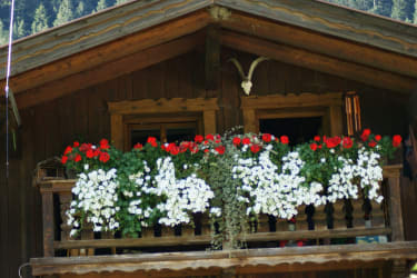 Blumenschmuck am Bruggerhof in Leutasch
