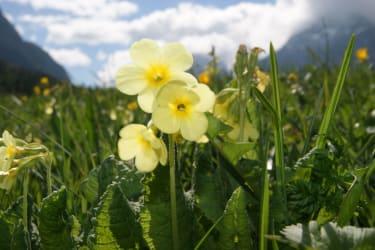 Blumenwiese am Bruggerhof in Leutasch