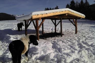 Unsere Ponys im Winter auf der Weide