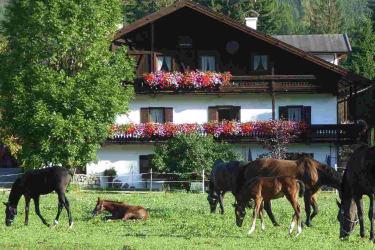 Tschaperhof - Urlaub mit Pferd in Tirol