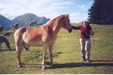 Pferde am Koppeneck