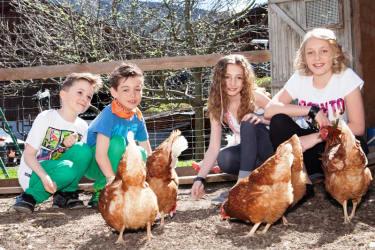 im Hühnergarten