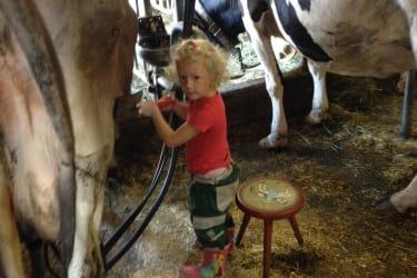 Sofia beim Melken